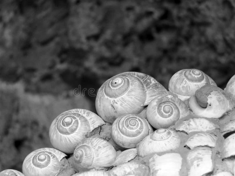 Snail shell art - snail`s art the arrangement. Snail`s art the arrangement - spirals in black and white royalty free stock photo