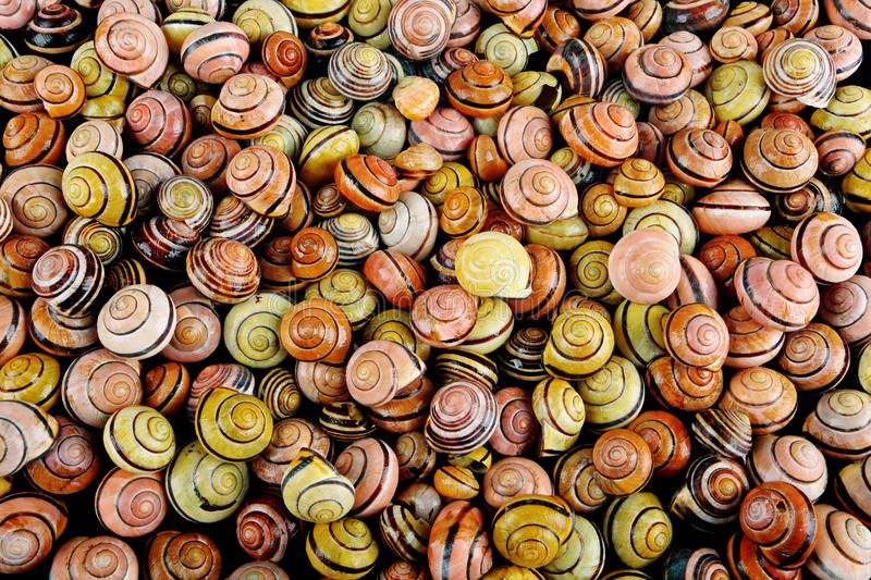 Snail shell background. Colorfull wet snail shell background, high detail stock photo