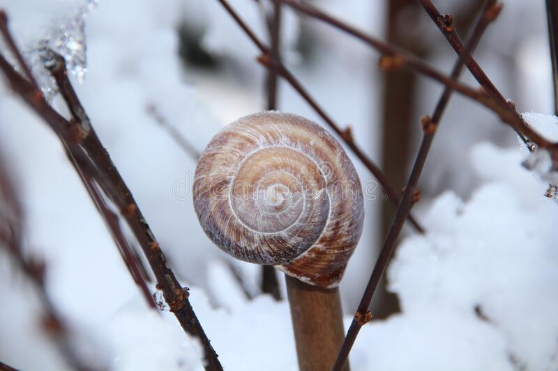 Snail Shell On Brown Tree Branch Free Public Domain Cc0 Image