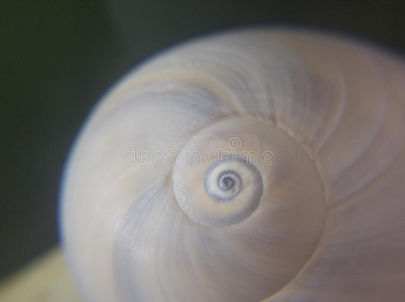 Snail shell closeup royalty free stock images