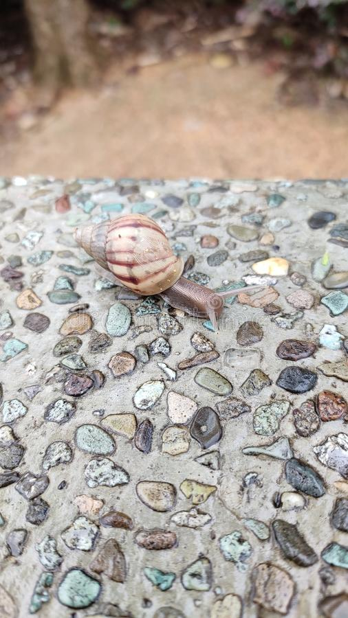 Snail with shell on concrete wall. Having pebbles covered cement royalty free stock photography