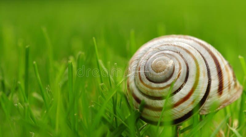 A snail shell on the grass stock photos