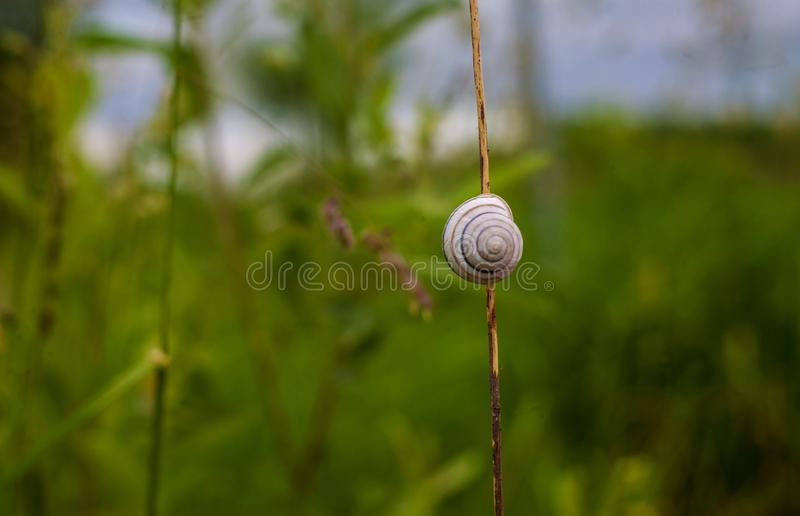 Snail shell on grass leaf. Beautiful nature macro, useful as background. royalty free stock photos