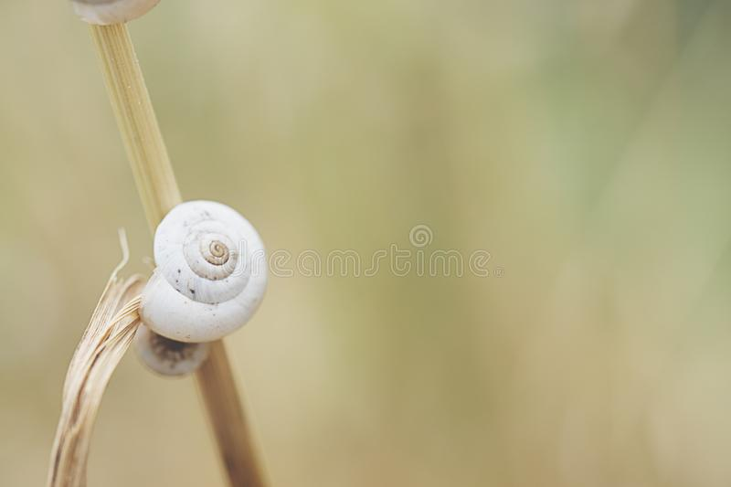 Snail shell on grass leaf. Beautiful nature macro royalty free stock image