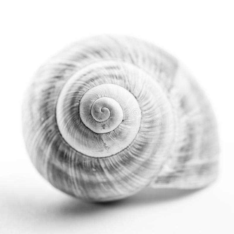 Snail shell. High-key view of a snail shell. Shallow depth of field royalty free stock photo