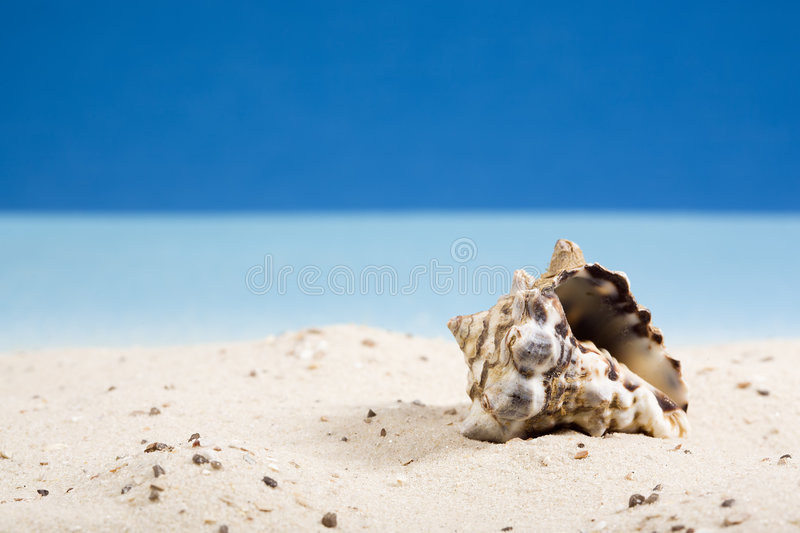 Download Snail Shell In Sand At Beach Stock Photo - Image: 4993374