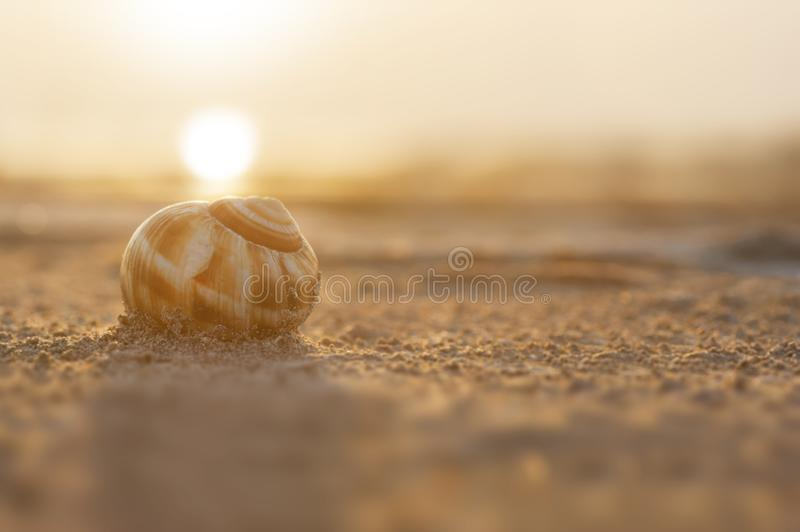 Snail shell with sand and sunset on the Burdur Lake in Turkey stock photography