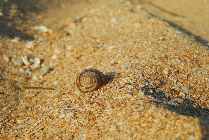 The snail shell on a sandy beach stock images