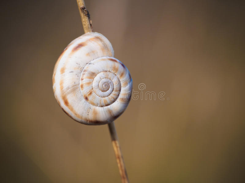 Snail shell royalty free stock images