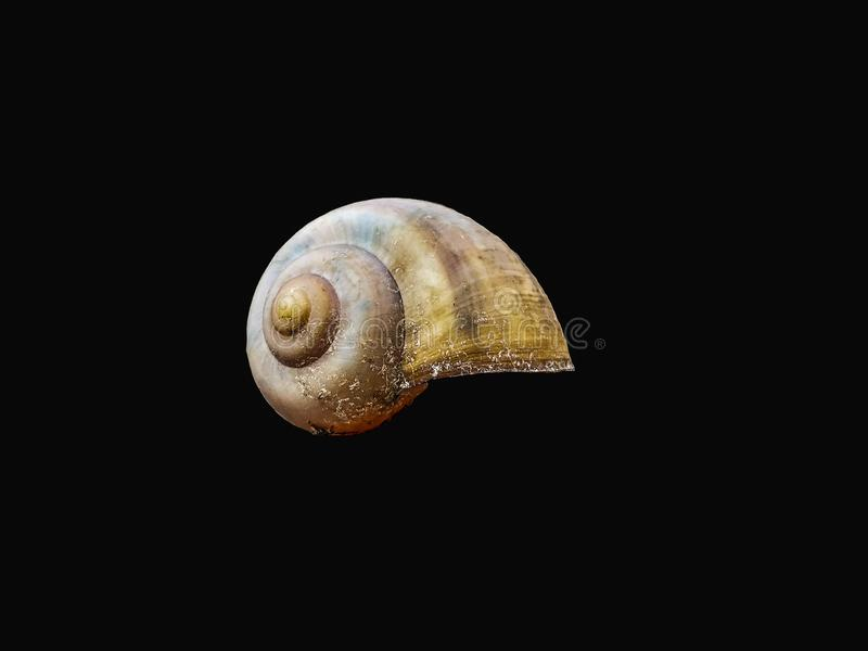 Snail shell top of the body royalty free stock images