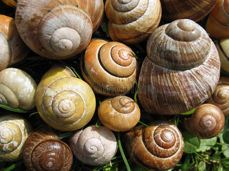 Snail shells royalty free stock photos