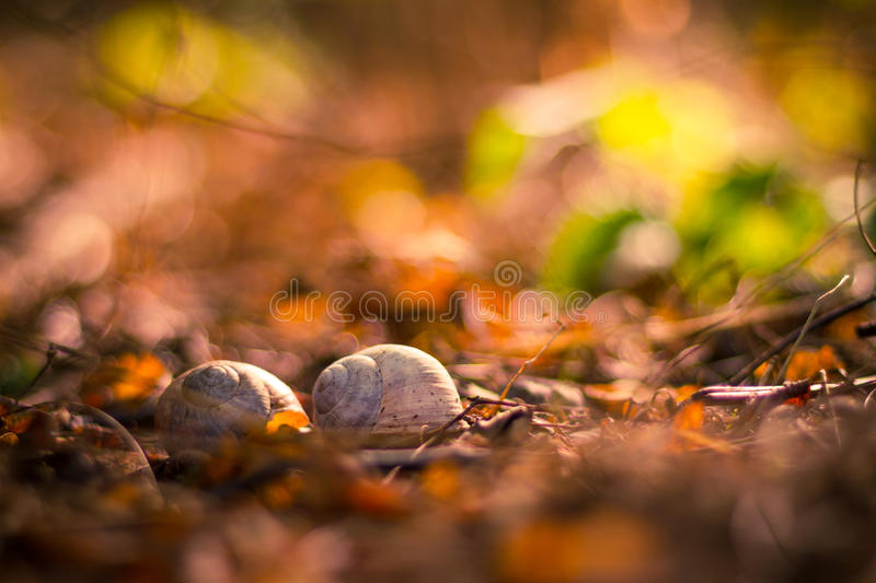 Snail shells on autumn background. Snail shell on grass leaf. Beautiful nature macro, useful as background royalty free stock image
