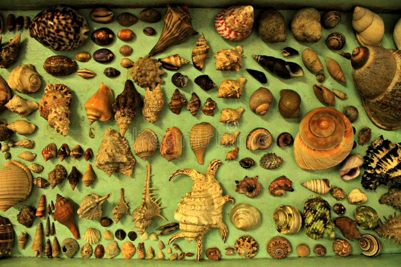 Snail Shells. A collection of snail shells from Mexico royalty free stock images