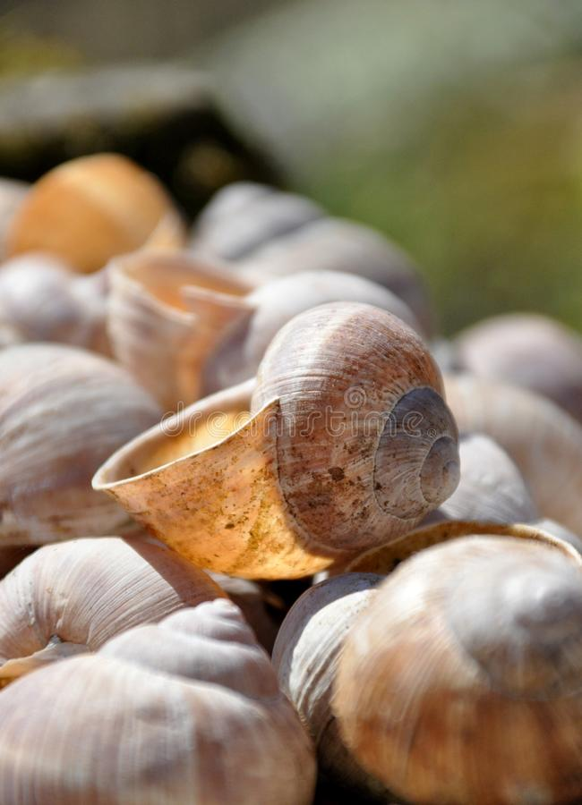 Snail shells. In the garden in the sun royalty free stock photo