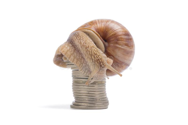 The snail sits high on the money, on a white background royalty free stock photo