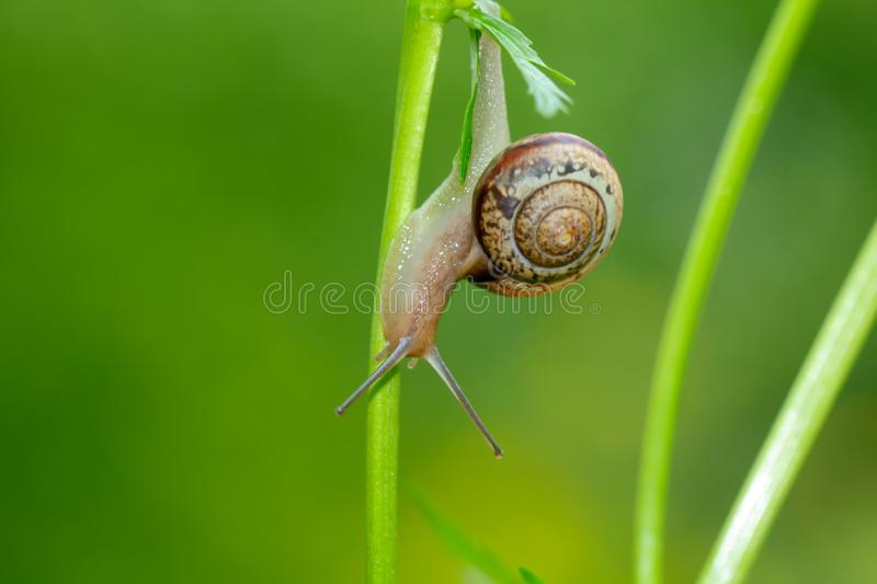 Snail. Summer flower. royalty free stock photography