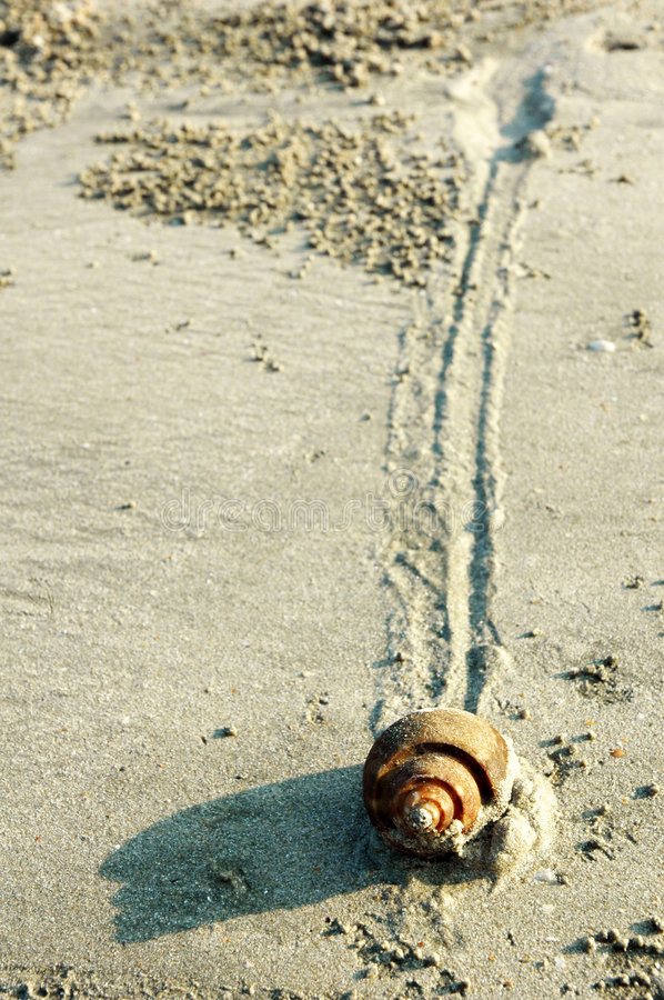 Free Snail Slow Pace On Sand Stock Images - 2420864