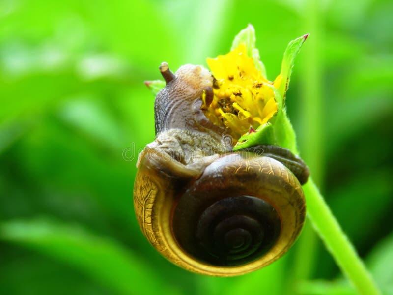 Snail, Snails And Slugs, Macro Photography, Invertebrate royalty free stock image