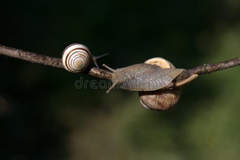 Snail, Snails And Slugs, Molluscs, Invertebrate Free Public Domain Cc0 Image