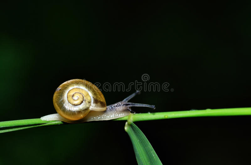 Download Snail on stalk stock image. Image of garden, nature, copy - 25809027