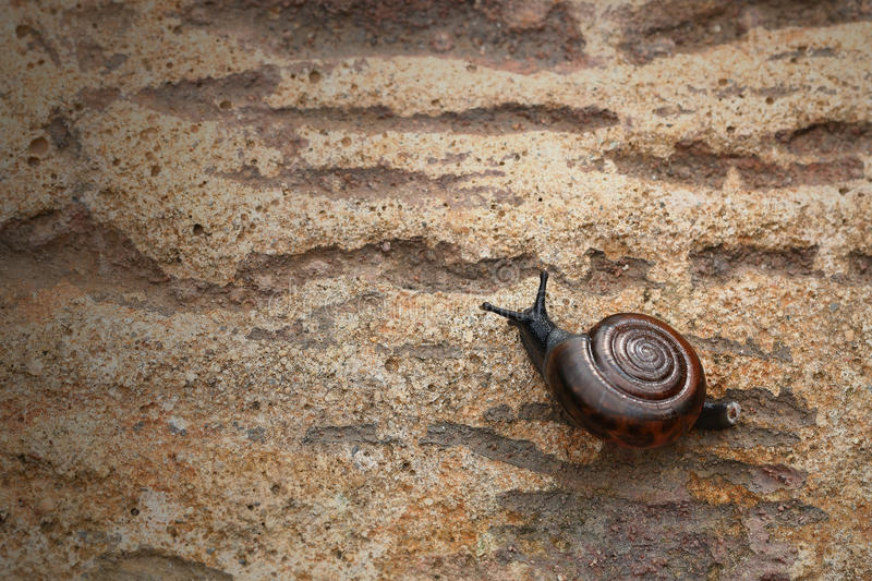 Snail on the stone for pattern royalty free stock photo