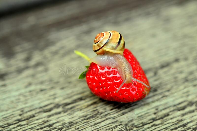 Snail On Strawberry Free Public Domain Cc0 Image