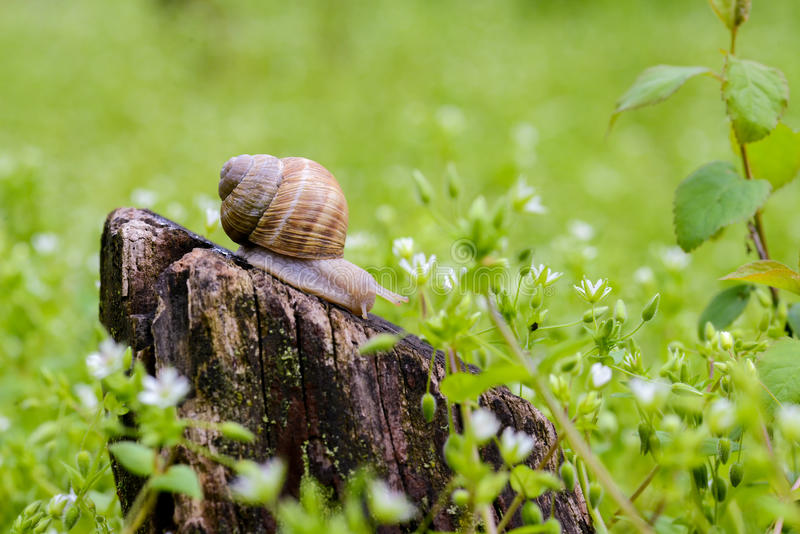 Download Snail on the stump stock image. Image of brown, burgundy - 83701781