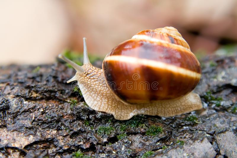 Snail in a Summer Garden 1 stock photo