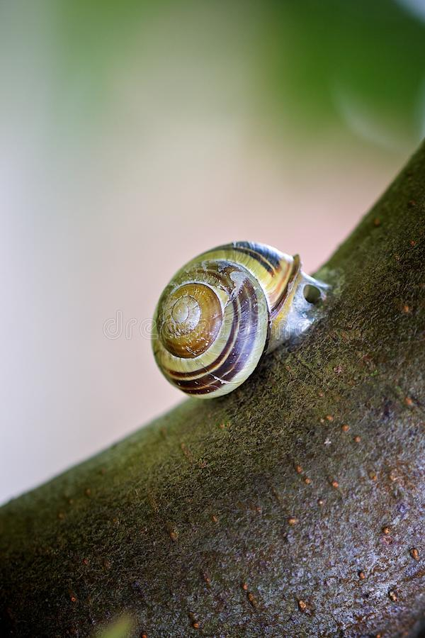 Snail on a tree. Snail crawling op on a tree stock images