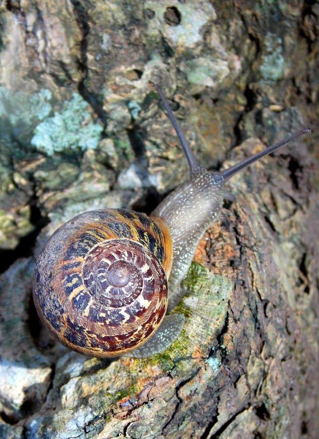 Snail on tree stock photo