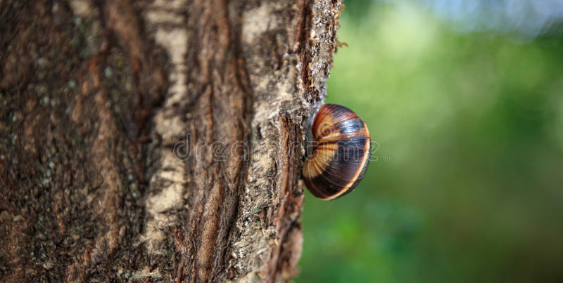 Snail on a tree trunk stock photos