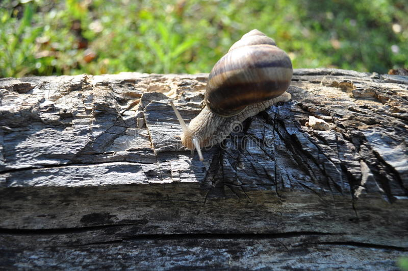 Snail on tree stock images