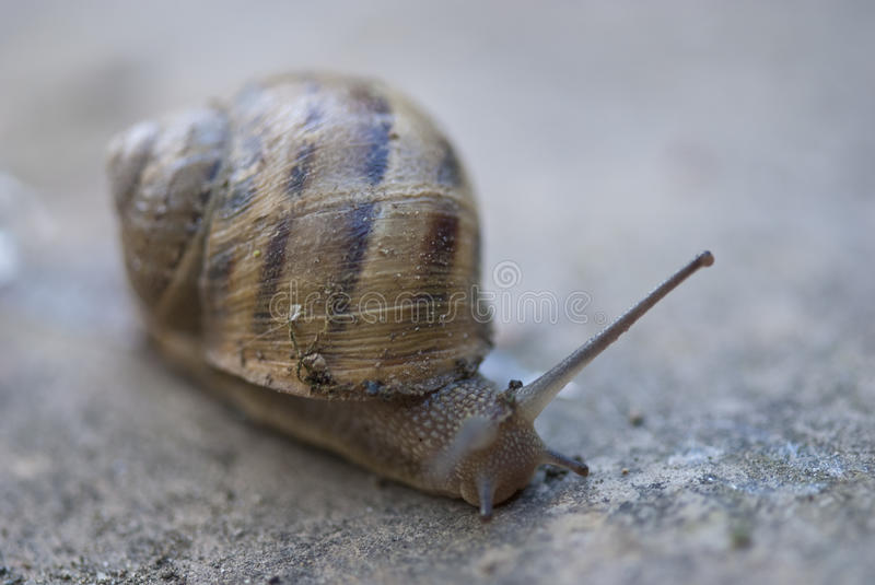 Snail On A Tuscan Garden, Italy Stock Photography