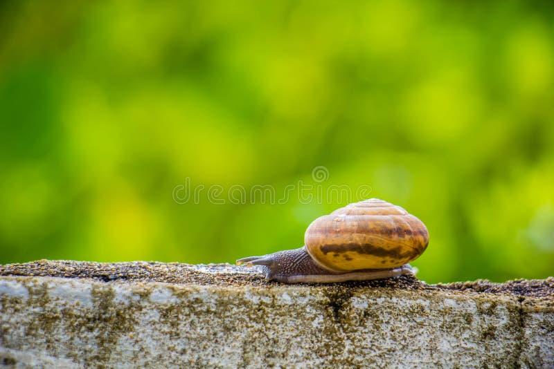 Snaile en el muro de cemento en primer macro empañó el fondo foto de archivo