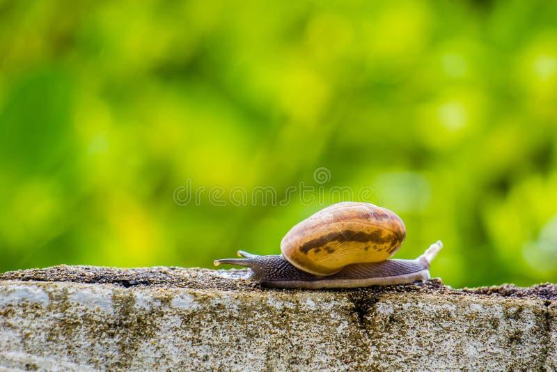 Snaile op de Concrete muur op macroclose-up vage achtergrond stock afbeelding