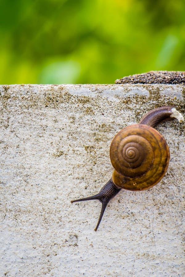 Snaile op de Concrete muur op macroclose-up vage achtergrond royalty-vrije stock foto's