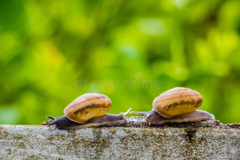 Snaile op de Concrete muur op macroclose-up vage achtergrond stock afbeeldingen