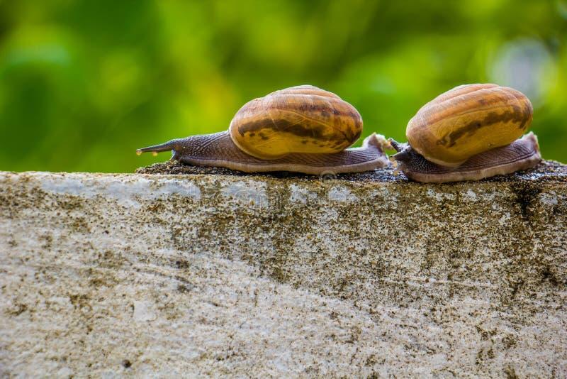 Snaile op de Concrete muur op macroclose-up vage achtergrond royalty-vrije stock afbeeldingen