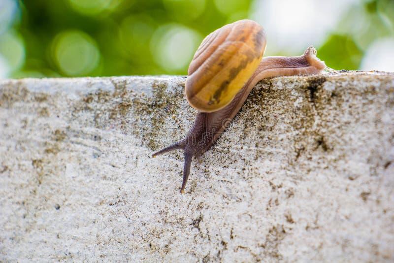 Snaile op de Concrete muur op macroclose-up vage achtergrond royalty-vrije stock afbeelding