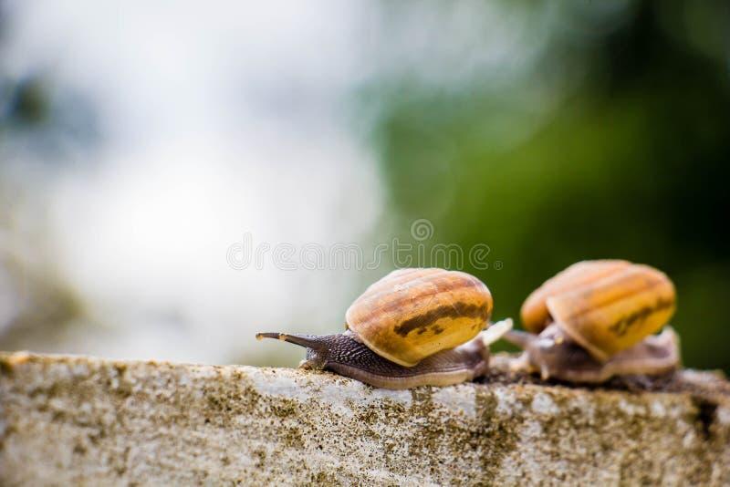 Snaile op de Concrete muur op macroclose-up vage achtergrond stock foto