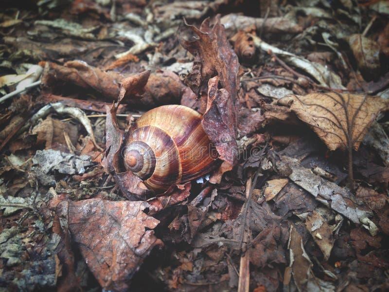 Snailen på lämnar royaltyfri bild