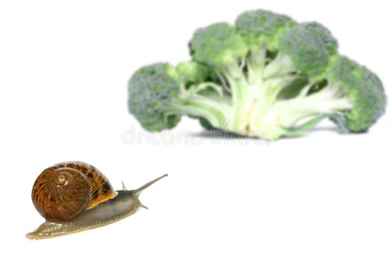 snailfrestelse royaltyfria foton