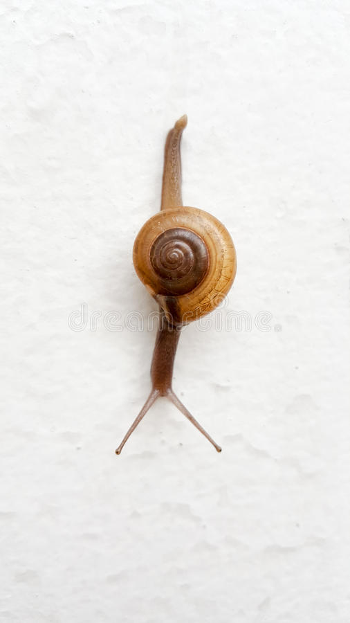 Snaill que rasteja na parede branca Esta foto disparada pelo telefone celular imagem de stock