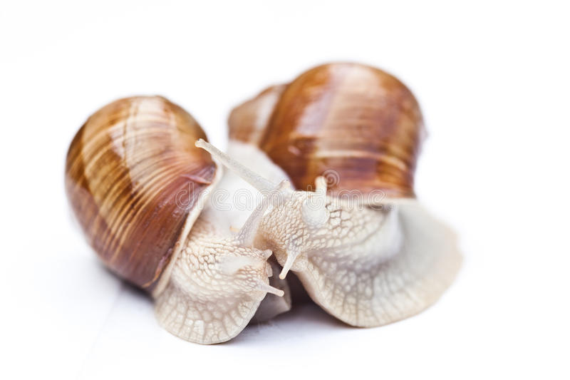 Download Snails Royalty Free Stock Photo - Image: 21509815