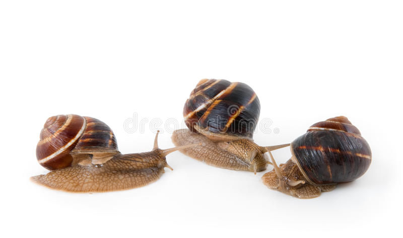 Download Snails stock image. Image of sticky, mollusc, nature - 22288381