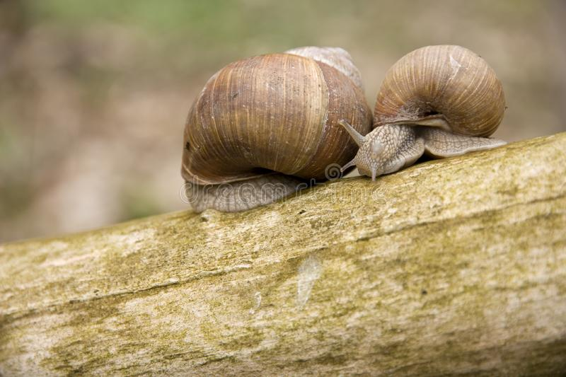 Download Snails stock image. Image of conversation, sunny, snail - 23069735