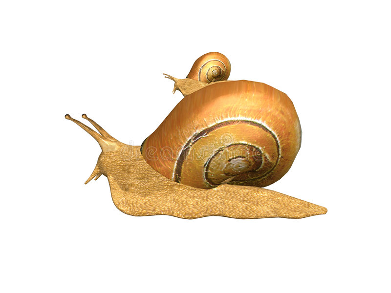Snails stock images