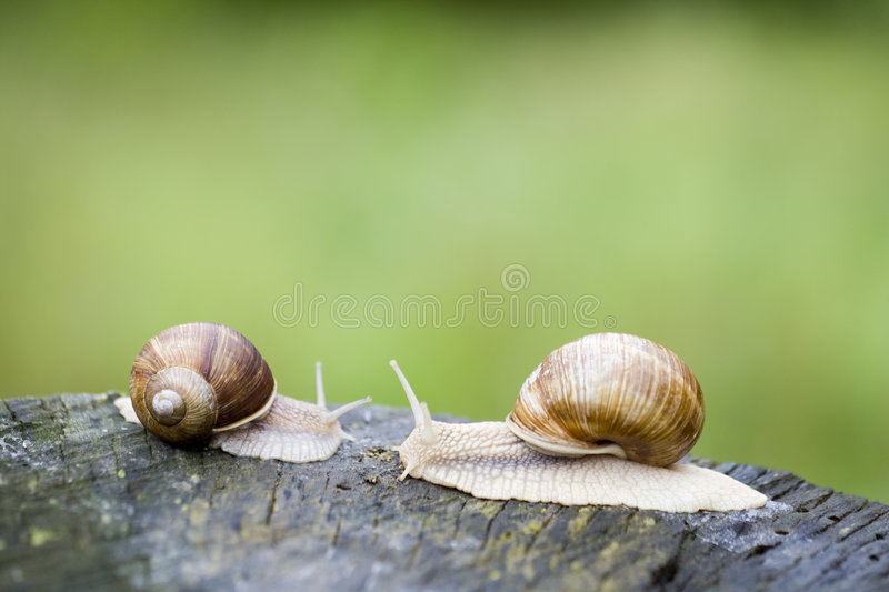 Download Snails stock image. Image of forest, live, food, french - 5717093