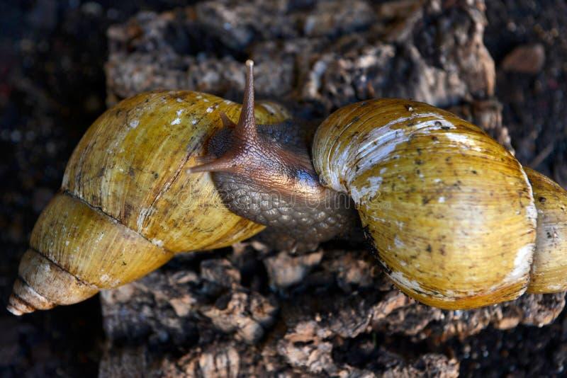 snails royaltyfria foton