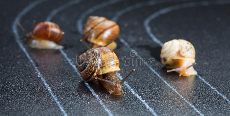 Snails on the athletic track stock images